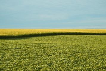 farm-field-2642467_1920